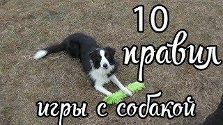 10 правил игры с собакой / Дрессировка собак