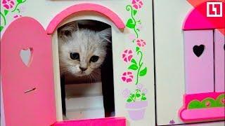 «Каждой кошке нужен дом!»