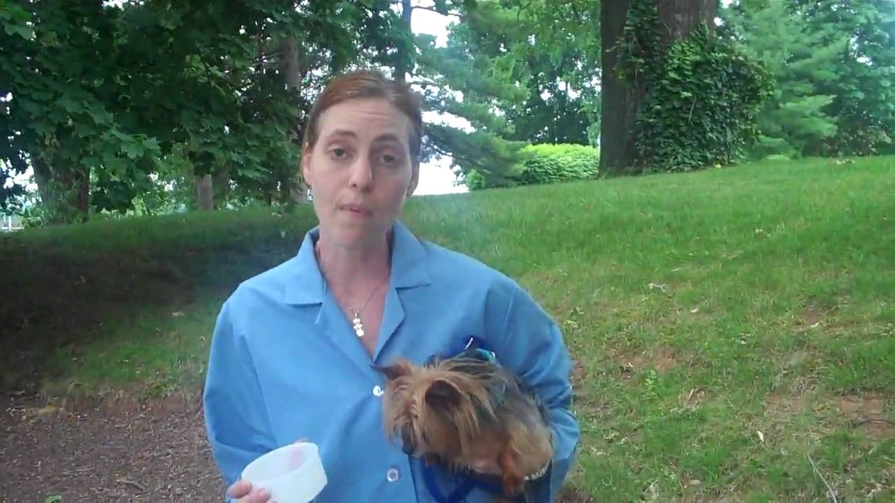 How to obtain a urine sample from your dog - YouTube