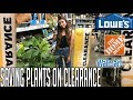 Houseplant Shopping For Dying Sales Clearance Plants at Big Box Stores