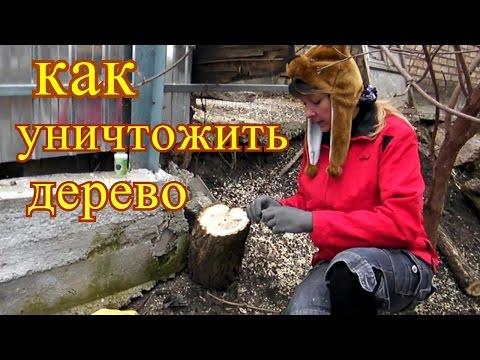 Как уничтожить ненужное дерево на участке