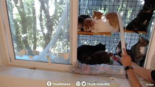 Stealth feral cat bandage removal - TinyKittens.com