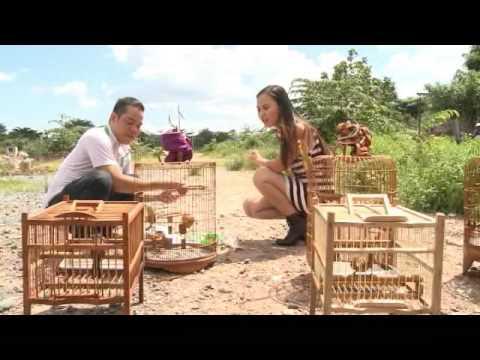 Mẹo nuôi chim kiểng - Vui Sống Mỗi Ngày [VTV3 -- 10.07.2014]