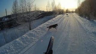 Защита при нападении собак на велосипедиста(, 2016-12-04T20:25:36.000Z)