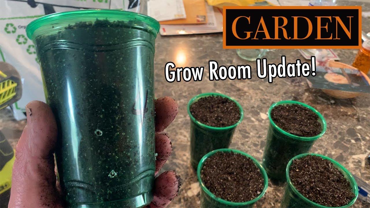 Start Watermelon Seeds At Home Seedling Starting Secrets Youtube