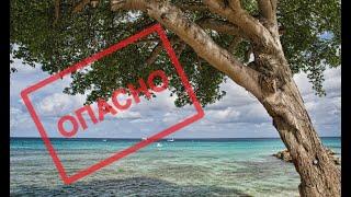 Самое опасное дерево в мире. Это нужно знать!