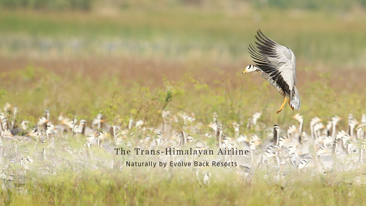 The Trans-Himalayan Airline - Naturally by Evolve Back Resorts