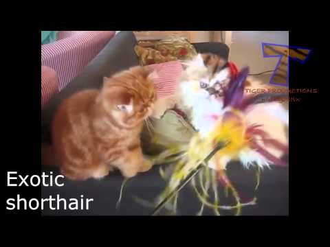 Unusual cat breeds   Funny and cute cat compilation