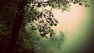 The Grey Forest - Gotas de invierno