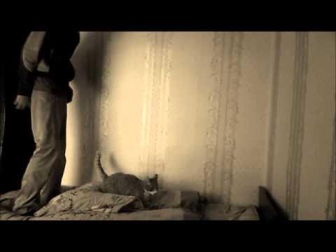 Почему кошки презимляются на все 4 лапы