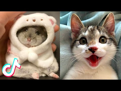 Adorable TikTok Pets that Will Make your Day Better 100% 🥰