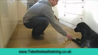 Training Dogs Impulse Control