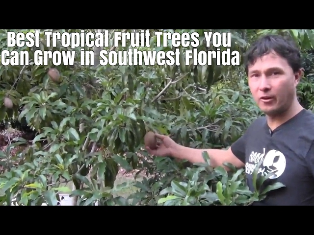 Best Tropical Fruits Trees You Can Grow