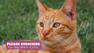Calming Music for Cats  2 Hours Cat Sleep Music New 2019 ☯LCZ105
