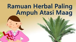 Ramuan Herbal Paling Ampuh Atasi Sakit Maag
