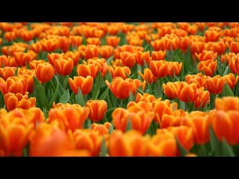 Цветы по оттенкам радуги. Растения оранжевого цвета