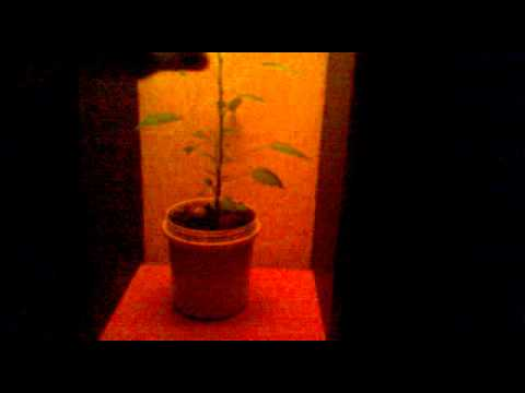 growbox app for android