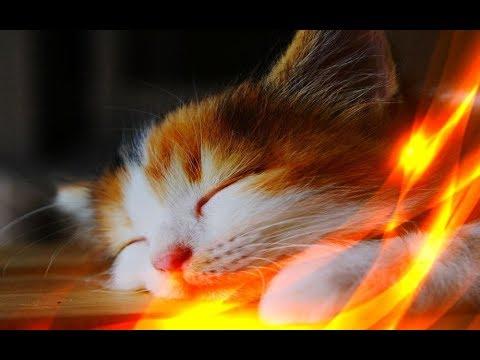 Видео: Позитив Смешные кошки Приколы про животных Создай себе хорошее настроение