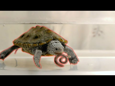 FEEDING TURTLES LIVE FISH?!? | Live Food And Treats For Turtles