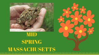 Mid Spring in Massachusetts ~ Wildlife