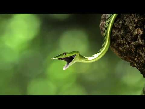 Secrets of the Rainforest's Canopy