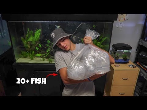 ALL the NEW FISH ARRIVED!!!