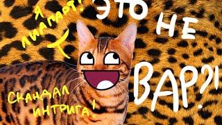 Где же Вар?! (Wild Cats Online)