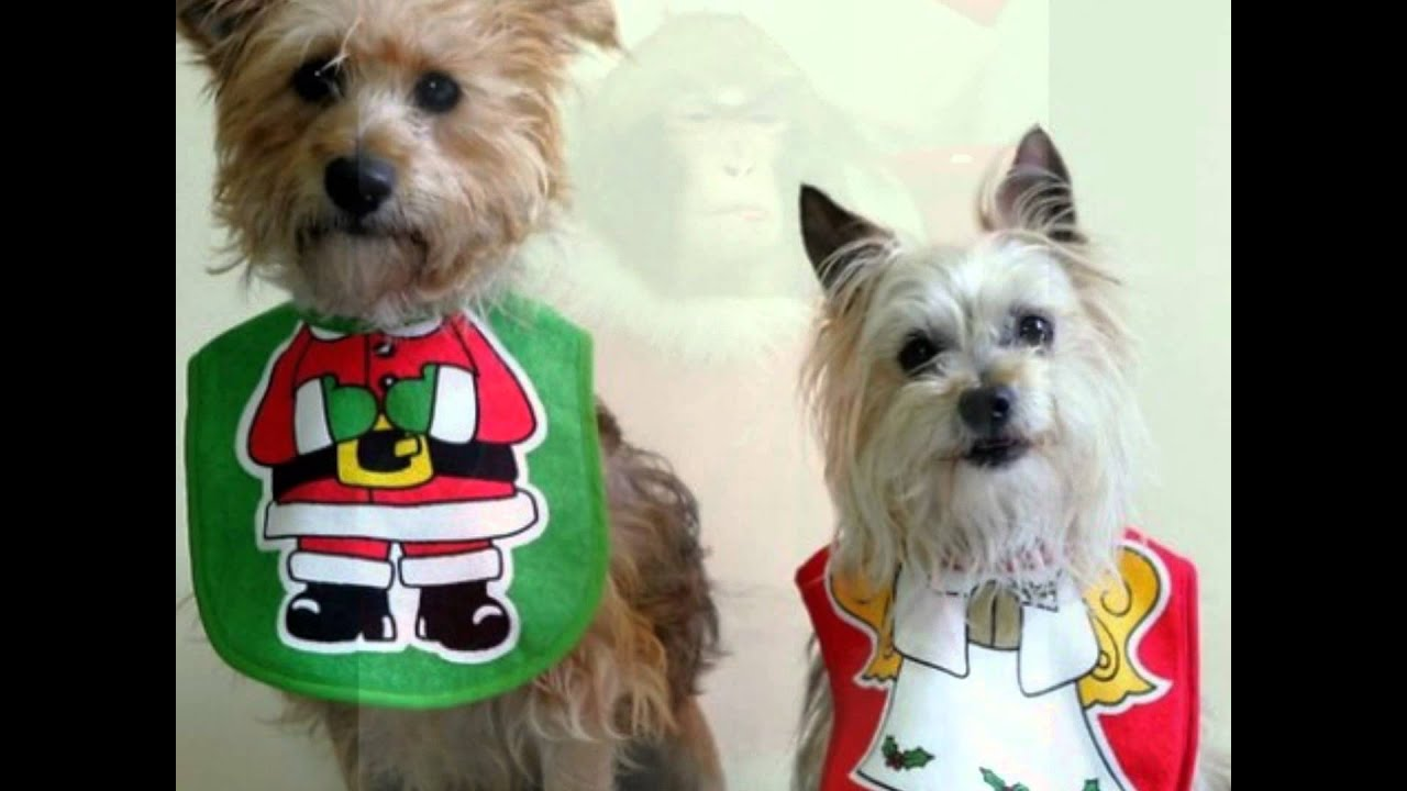 Funny Animals Christmas Edition Youtube