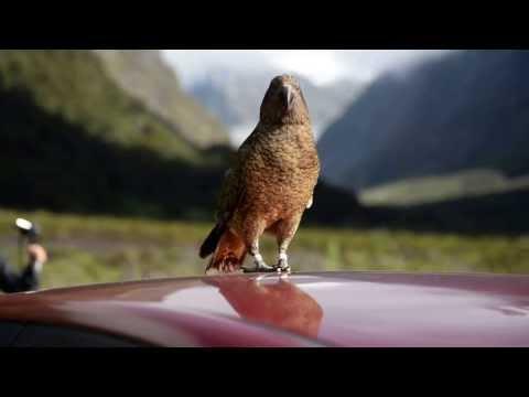 Kea – Mountain Parrot on our car