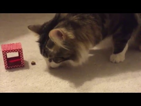 DIY Valentine's Puzzle Box For Cats