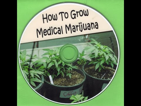 How To Grow Medical Marijuana from start to finish