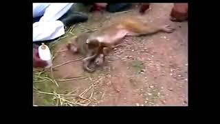 Punit Chauhan siyana kahan gaye Mamta bhare din video song