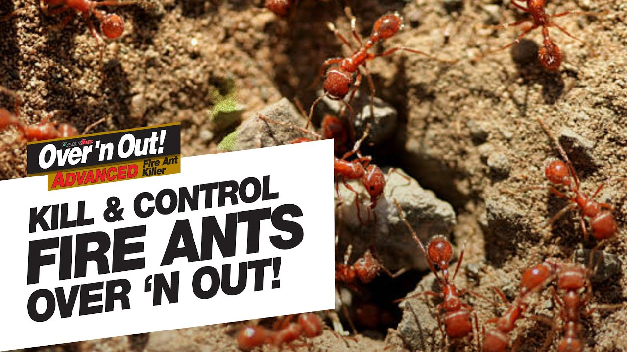 Fire Ants With Over N Out Advanced
