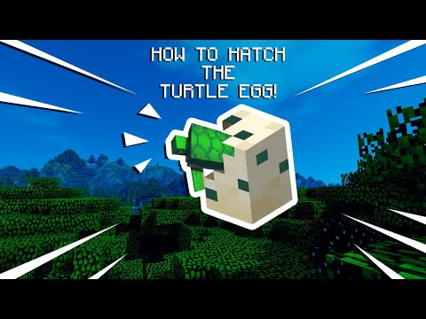How To Get & Hatch A Turtle Egg!   Minecraft