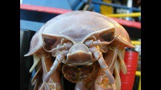 10 самых страшных и опасных животных мира