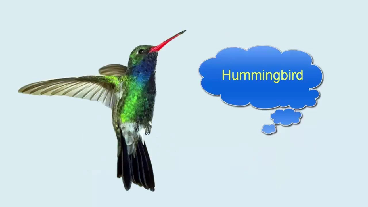 Birds Name in Hindi and English पक्षियों के …