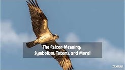 The Falcon Meaning: Symbolism, Totems, and More!