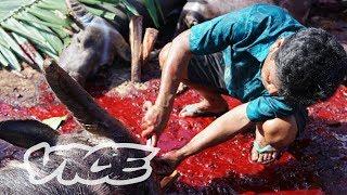 Indonesian Tribe's Traditional Funeral Rituals: Mass Buffalo Sacrifice