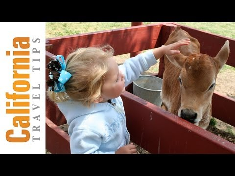 Amy's Farm - California farm tours