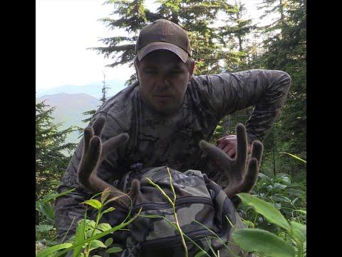 Deer Hunting: Sitka Blacktail Deer Hunting During July In Southeast Alaska 2020