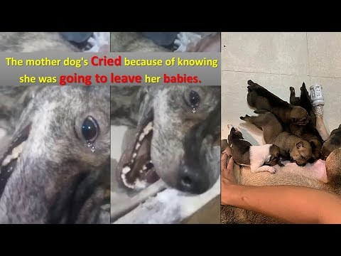 Too Heartbreaking, Rescue a Mom Dog Was Beaten While Seeking Food For Her Babies
