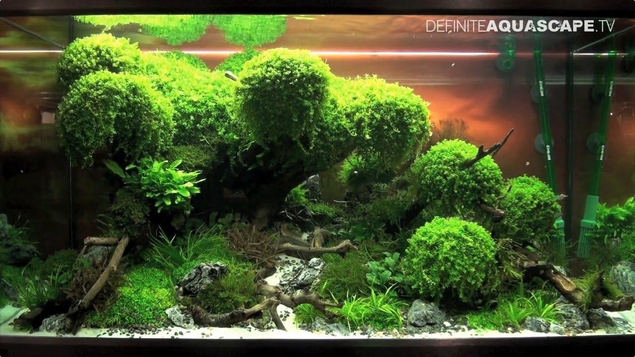 The art of the planted aquarium 2015 eheim xl for Plante aquarium