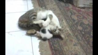 Sweet cat playing with its puppy | شوف القطه بتعمل ايه !! Thumbnail