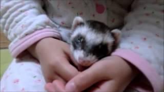 マイリーは長女が大好きで、 彼女に撫でられると寝てしまいます。 こち...