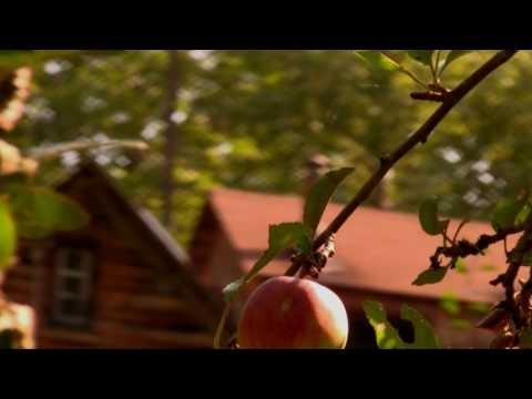 Iron & Wine - Fever Dream Music Video