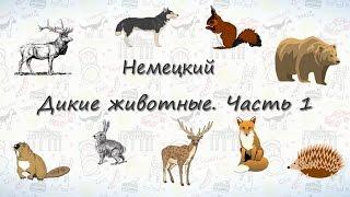 Животные на немецком. Дикие Животные. Часть 1 | ВИДЕОТРЕНАЖЕР