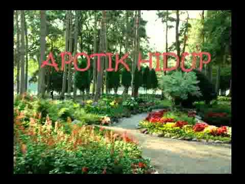 Taman Apotik Hidup Dokumenter