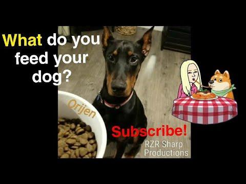 What Do We Feed Our European Doberman Pinscher?