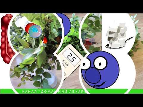 Листья и ягоды черники для лечения диабета. Рецепты - Домашний лекарь - выпуск №36