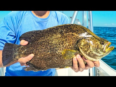 Sight Fishing For Tripletail Under Crab Trap Buoys